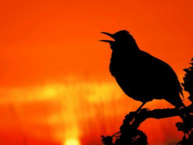 Early Bird Class