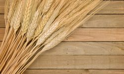 Photo of wheat gathered on a wooden background.