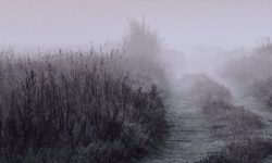 Photo of dirt road going off into infinity in the early morning mist.