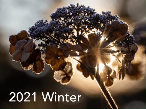 Winter 2021 AFF Catalog