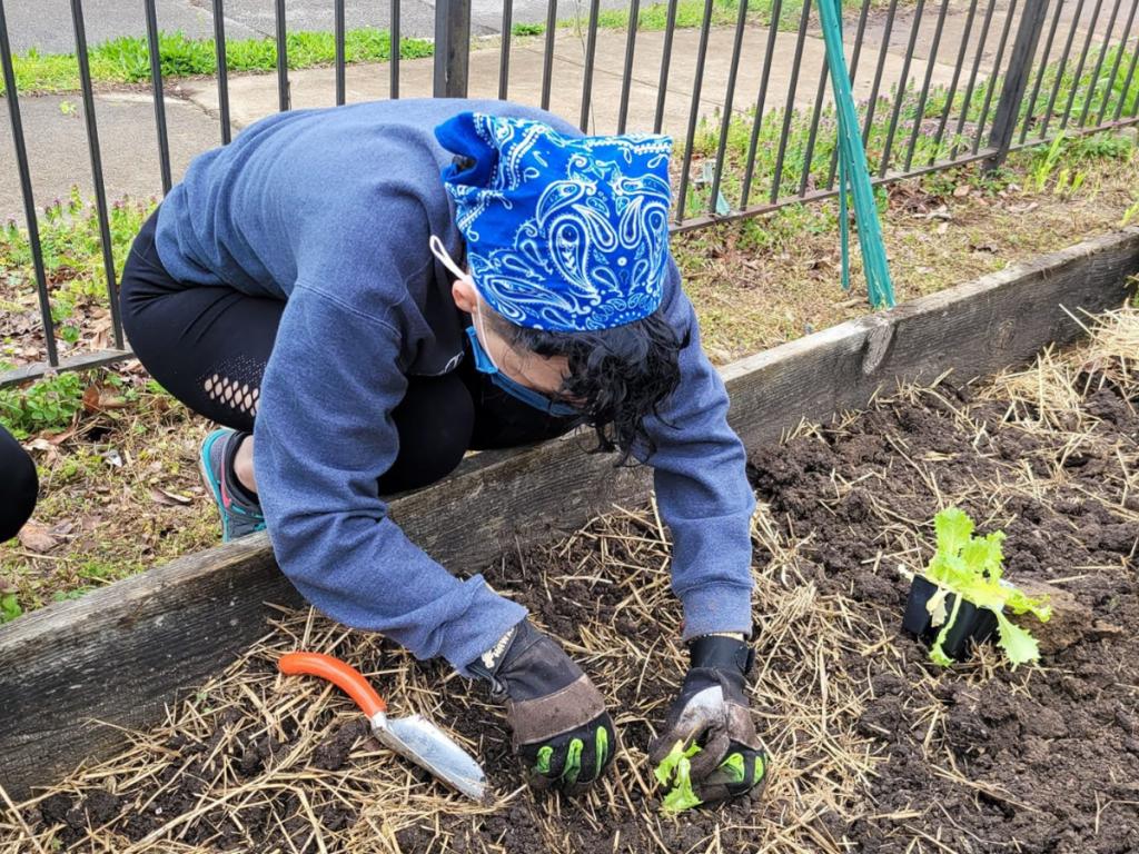 Planting 2 43
