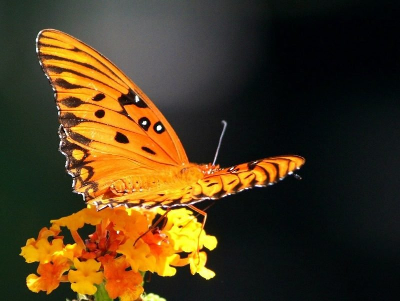 Photo of a butterfly full and beautiful.