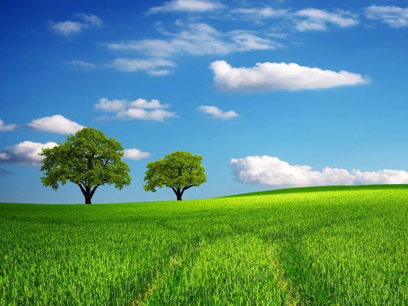 Photo of beautiful new day with green grass, trees and blue sky.