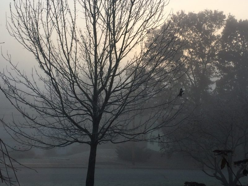 photo of a foggy morning meadow with bare tree in the foreground
