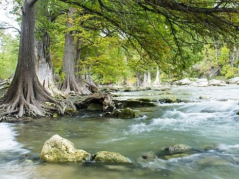 Photo of river flowing past a rock and a tree.