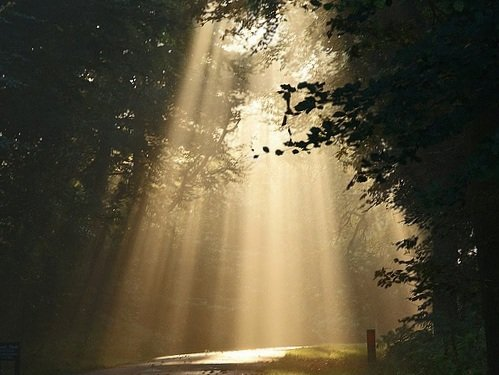 Photo of light streaming through a dark forest.