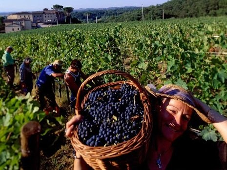 Photo of workers in a vineyard